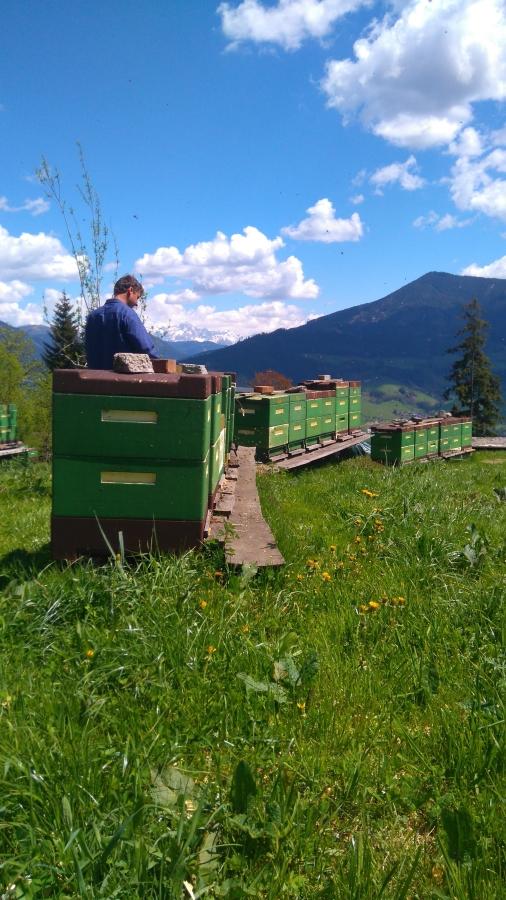 Heimbienenstand im Sommer 2016