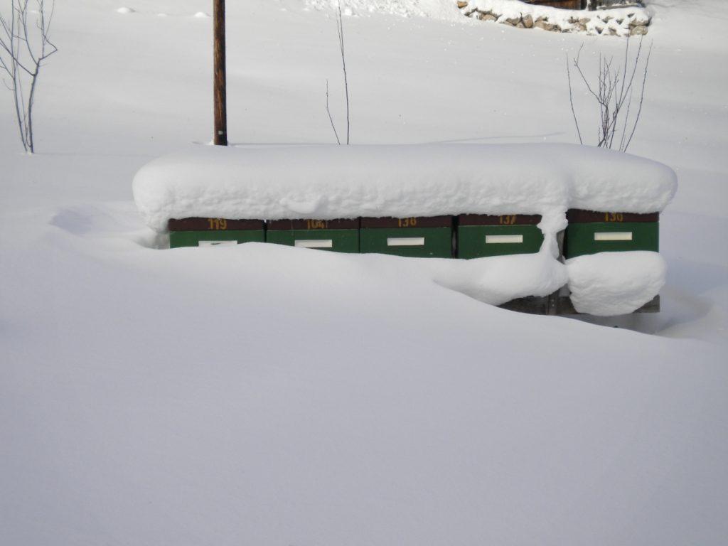 Heimbienenstand im Winter