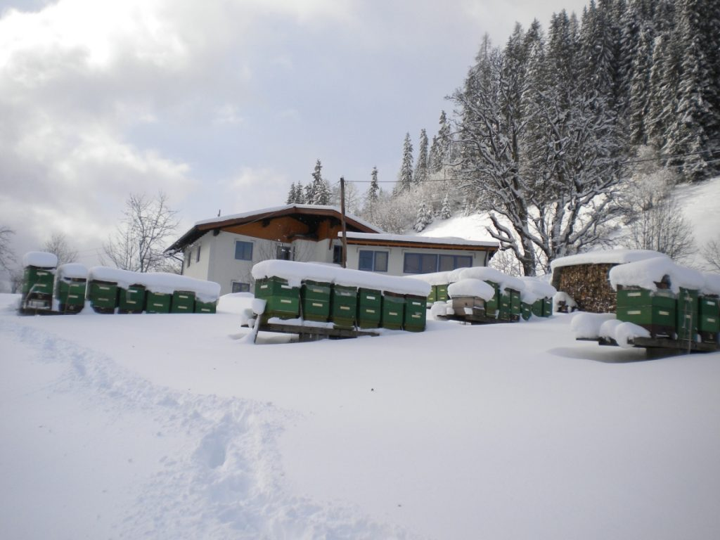 Heimbienenstand mit Wohnhaus im Winter